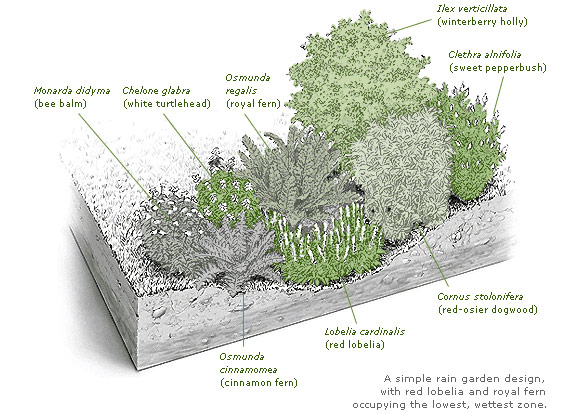 Water Retaining Plants : North american lawn landscape growing values together